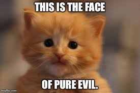 Evil Cat Meme - underestimate him at your peril imgflip