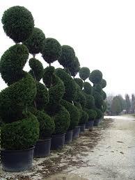 Topiaries Plants - 170 best topiary images on pinterest topiaries topiary garden