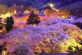 nagano u0027s top cherry blossom spots u2013 go nagano