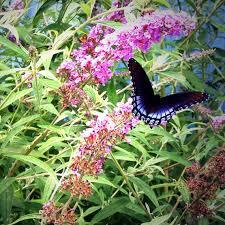 building a safe haven for birds bees u0026 butterflies martha stewart