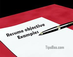 Objective Examples On A Resume by 100 Sample Curriculum Vitae Layout Download