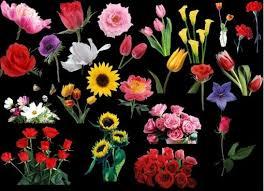 wedding flowers images free free wedding flowers psd free psd 353 free psd
