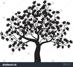 Maple Tree Symbolism by Autumn Maple Tree Vector Stock Vector 142837522 Shutterstock