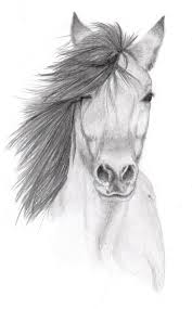 gallery easy pencil sketches of animals drawing art gallery