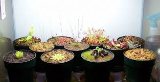 how to make a carnivorous plant terrarium carnivorous plant resource