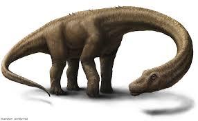dinosaur fossils photos huge dinosaur skeleton unearthed
