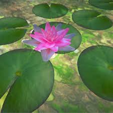obj mode water lily flower