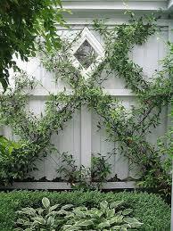 Build A Rose Trellis Best 25 Vines Ideas On Pinterest Wisteria Tree Wysteria Tree