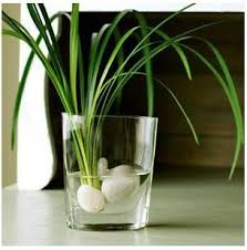 best 25 water plants indoor ideas on pinterest water plants