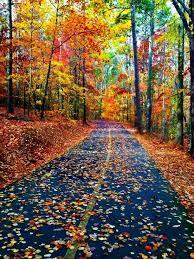 autumn colours autumn pinterest autumn colours autumn and