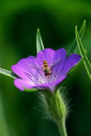plants native to england best 25 british wild flowers ideas on pinterest british flowers