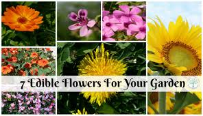 Edible Flowers Edible Flowers You Can Plant