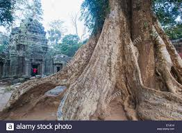 asia cambodia siem reap angkor wat ta prohm temple tree