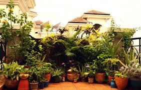 Plants For Home Decor Plants For Balcony Gardens Plus Indian House Garden Designs
