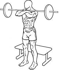 file front squat to bench 1 858x1024 png wikimedia commons