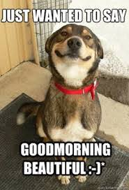 Good Morning Beautiful Meme - 1000 good morning memes funny kermit memes monday gm memes