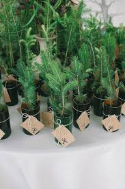 best 25 plant wedding favors 25 best images about wedding favors on wedding