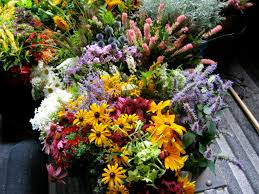 Wedding Flowers August Notes And News From Shady Grove Gardens Late August Cut Flower List