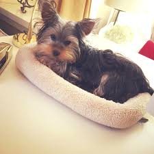 organization tips to prepare your home for your puppy helena alkhas