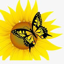sunflower butterfly vector material butterfly sunflower flowers