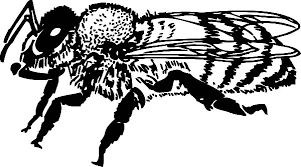 cute honey bee coloring pages coloring sky