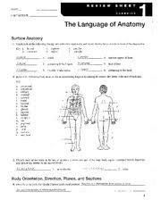 Anatomy Of The Heart Lab Anatomylab1answerkey Labtimbdate U2014 I The Language Of Anatomy