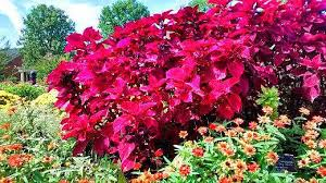 lewis ginter botanical garden photo tour