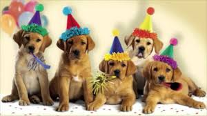 singing happy birthday happy birthday dogs singing