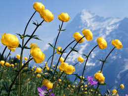 Cute Flower Wallpapers - wnp wallpapers u0026 pictures cute yellow flower wallpaper