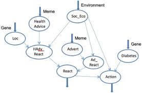 Genes And Memes - a computational model of gene meme co evolution bayesian network