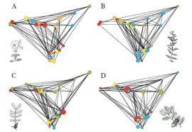 imagenes matematicas aplicadas matemáticas aplicadas para conservar los bosques microsiervos