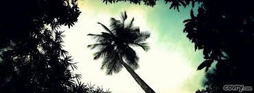 palm tree top cover covry