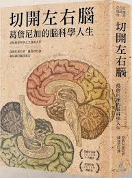 cuisine cryog駭ique 35 best 大腦brain images on brain central bank and