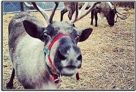 Washington Christmas Tree Farms - seattle and king to whatcom county areas of washington state