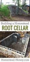 building a homestead root cellar homestead honey