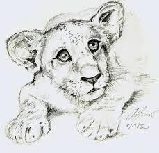 lion cub sketch by kique on deviantart