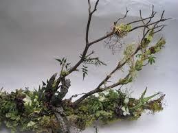 manzanita branches manzanita branches françoise weeks