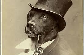 Benson Dog Meme - the best old money dog memes