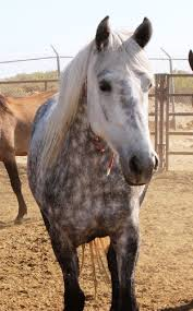 mustang adoptions what a beautiful mustang mare for adoption out iin wyoming
