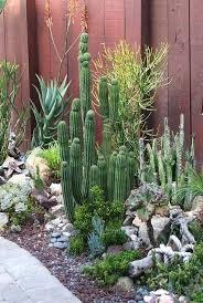 succulents meaning 537 best flowers u0026 plants cacti succulents sedums etc images