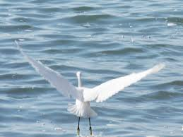 67 not out the signs while walking the ibiza coast with a white heron