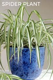 25 best plants images on pinterest houseplants indoor gardening