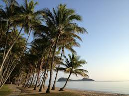 Cateracterum Palm by Palm Cove Beach Activities