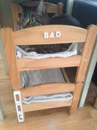 Cat Bunk Bed Can A And A Cat Be Bunk Bed Mates Seems So Ikea Hackers