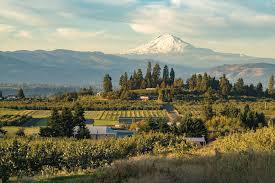 Valley Oregon An Apple Picking Trip In Oregon S River Valley Portland Monthly