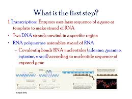 what is central dogma from dna to protein ppt video online download