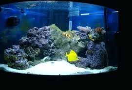 led reef lighting reviews marine aquarium lighting led reef aquarium lighting reviews crypdist