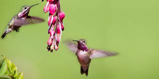 hummingbird flowers about birds 20 ways to keep hummingbirds coming back