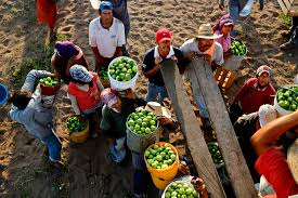 product of mexico hardship on mexico u0027s farms a bounty for u s