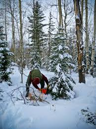 Cutting Christmas Tree - cutting your own christmas tree in jackson hole painted buffalo